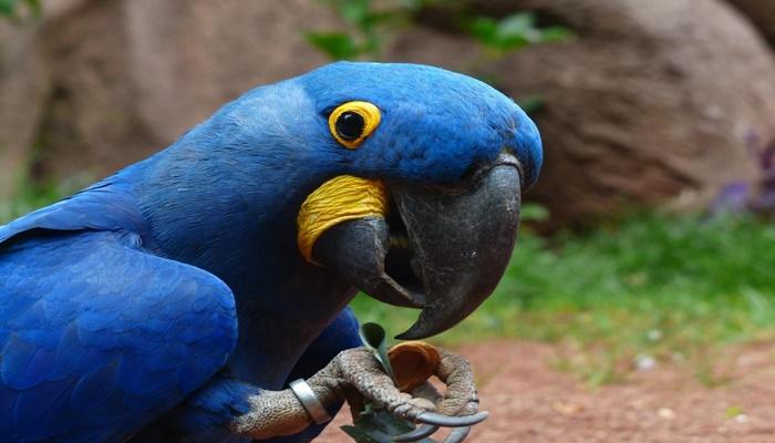 10 espécies me extinção no Brasil